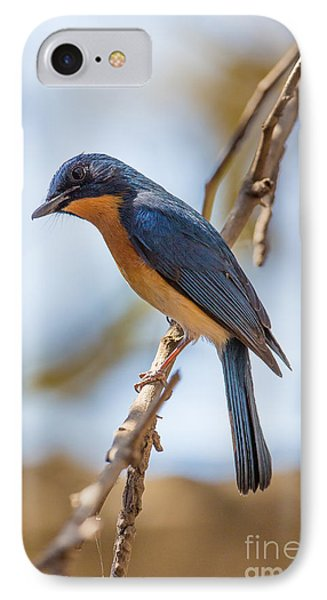 Tickells Blue Flycatcher, India IPhone Case by B. G. Thomson