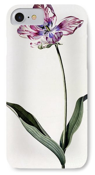 Tulip IPhone Case by Georg Dionysius Ehret