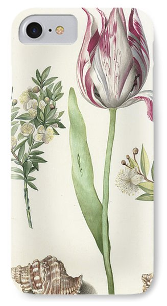 Tulip IPhone Case by Maria Sibylla Graff Merian