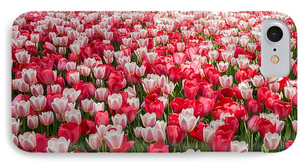 Tulips IPhone Case by Holden Parker
