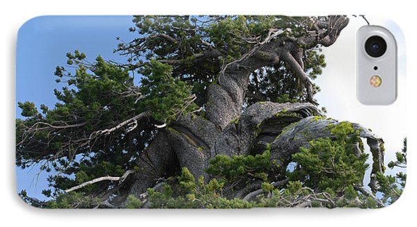 Twisted And Gnarled Bristlecone Pine Tree Trunk Above Crater Lake - Oregon Phone Case by Christine Till