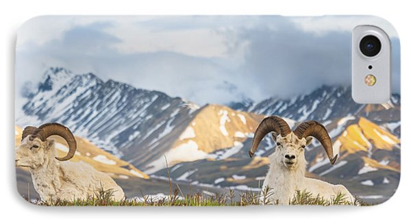 Two Adult Dall Sheep Rams Resting IPhone Case by Michael Jones