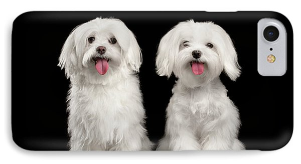 Two Happy White Maltese Dogs Sitting, Looking In Camera Isolated IPhone Case by Sergey Taran