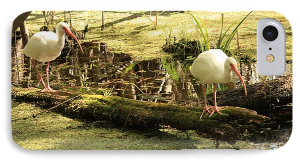 Two Ibises On A Log IPhone Case by Carol Groenen