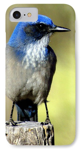 Utah Bird Phone Case by Marty Koch