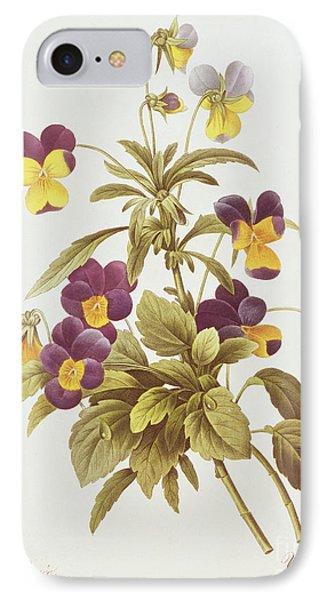 Viola Tricolour  IPhone Case by Pierre Joseph Redoute