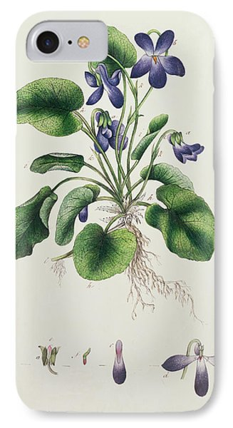 Violets IPhone Case by English School