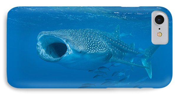 Whale Shark, Ari And Male Atoll IPhone Case by Mathieu Meur