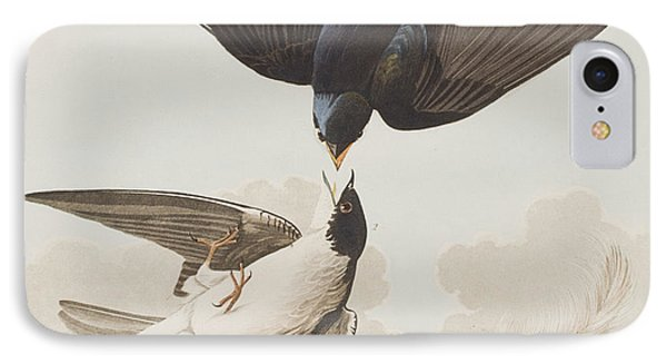White-bellied Swallow IPhone Case by John James Audubon