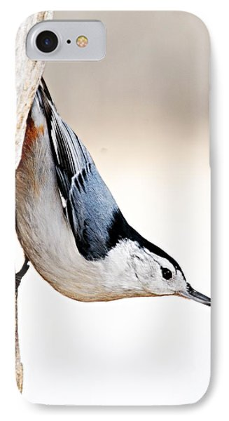 White-breasted Nuthatch Phone Case by Larry Ricker