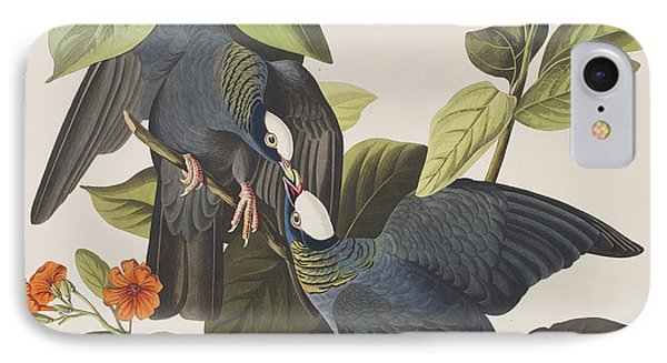 White Crowned Pigeon IPhone Case by John James Audubon