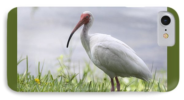 White Ibis  IPhone Case by Saija  Lehtonen