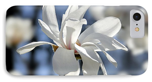 White Magnolia  IPhone Case by Elena Elisseeva