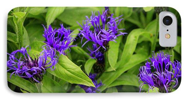 Wild Cornflowers In Iceland IPhone Case by Venetia Featherstone-Witty