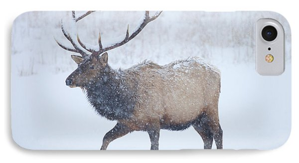 Winter Bull IPhone Case by Mike  Dawson