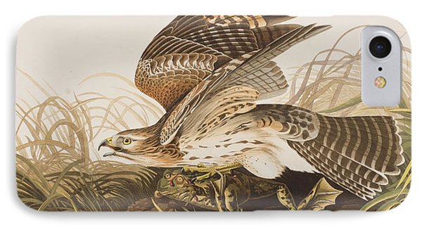 Winter Hawk IPhone Case by John James Audubon