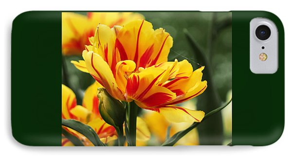 Yellow And Red Triumph Tulips IPhone Case by Rona Black