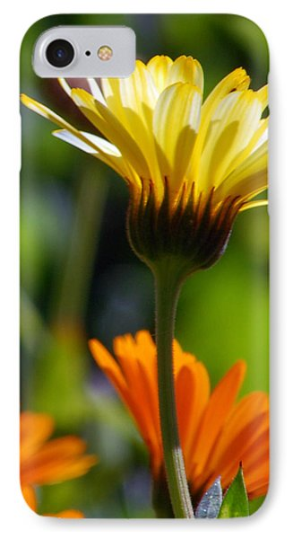 Yellow Daisy IPhone Case by Amy Fose