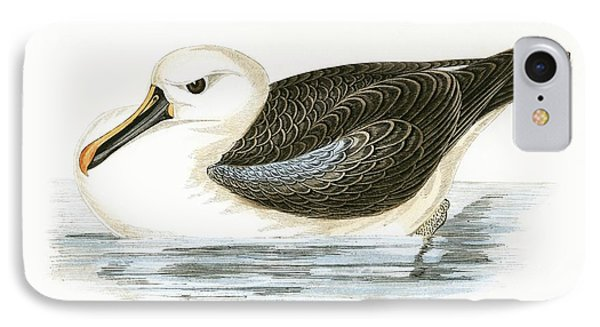 Yellow Nosed Albatross IPhone Case by English School