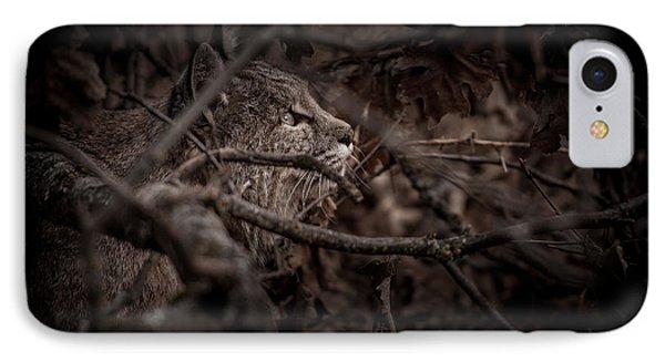 Yosemite Bobcat  IPhone Case by Ralph Vazquez