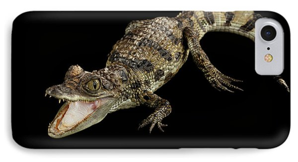 Young Cayman Crocodile, Reptile With Opened Mouth And Waved Tail Isolated On Black Background In Top IPhone 7 Case by Sergey Taran
