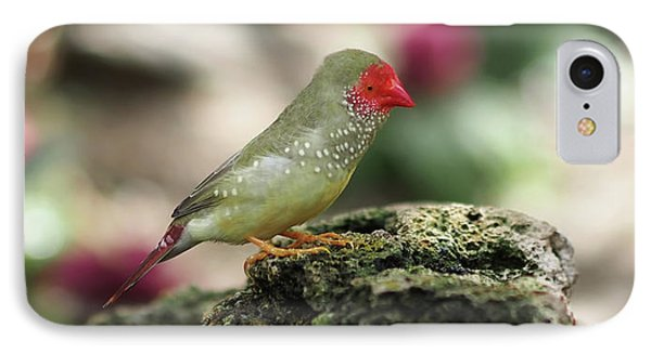 Young Star Finch IPhone Case by Rona Black