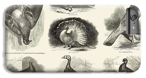 1868 Darwin Pigeon Breeds Illustration IPhone 7 Plus Case by Paul D Stewart