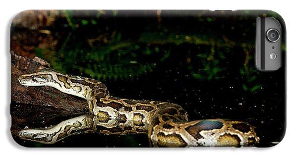 Burmese Python, Python Molurus IPhone 7 Plus Case by David Northcott