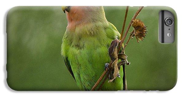 Lovely Little Lovebird  IPhone 7 Plus Case by Saija  Lehtonen