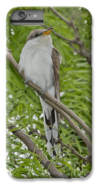 Yellow-billed Cuckoo IPhone 7 Plus Case by Anthony Mercieca