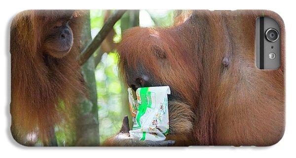 Sumatran Orangutan IPhone 7 Plus Case by Scubazoo