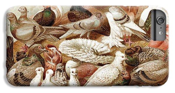 1870 Domestic Fancy Pigeon Breeds Darwin IPhone 7 Plus Case by Paul D Stewart