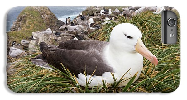 A Black Browed Albatross IPhone 7 Plus Case by Ashley Cooper