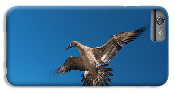 Red-footed Booby (sula Sula Websteri IPhone 7 Plus Case by Pete Oxford