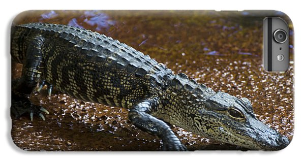 American Alligator IPhone 7 Plus Case by Mark Newman
