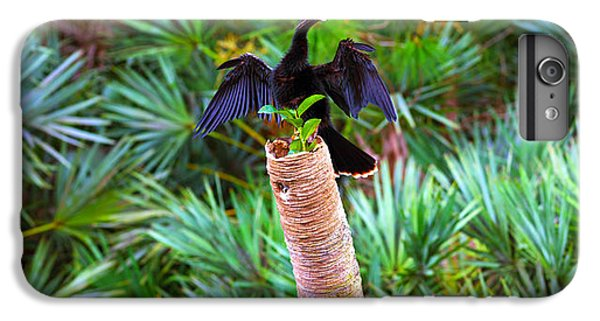 Anhinga Anhinga Anhinga On A Tree IPhone 7 Plus Case by Panoramic Images