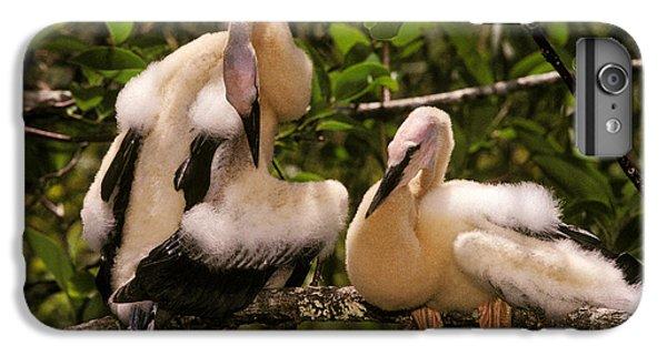 Anhinga Chicks IPhone 7 Plus Case by Ron Sanford