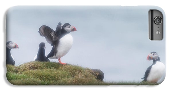 Atlantic Puffins Fratercula Arctica IPhone 7 Plus Case by Panoramic Images
