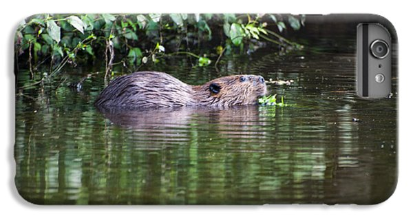 beaver swims in NC lake IPhone 7 Plus Case by Chris Flees