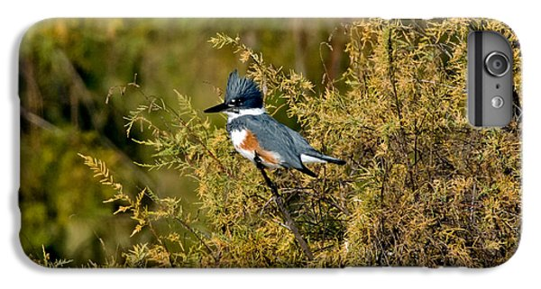 Belted Kingfisher Female IPhone 7 Plus Case by Anthony Mercieca