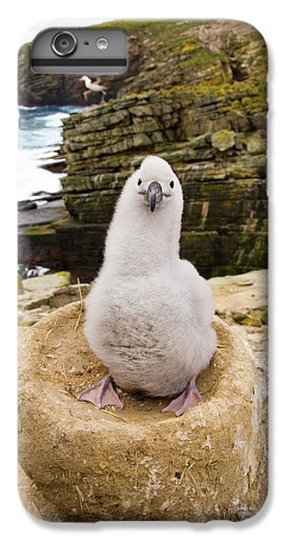 Black-browed Albatross Chick Falklands IPhone 7 Plus Case by