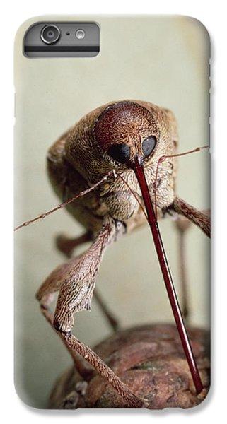Black Oak Acorn Weevil Boring Into Acorn IPhone 7 Plus Case by Mark Moffett