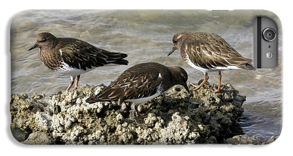 Black Turnstones Feeding IPhone 7 Plus Case by Bob Gibbons