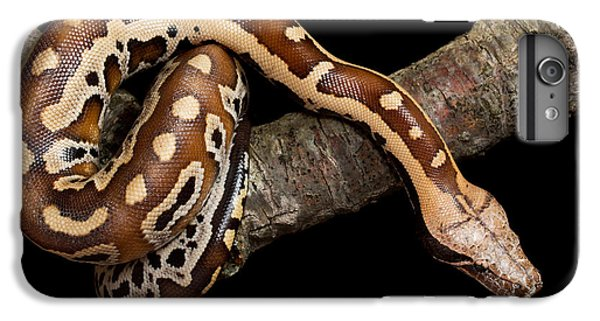 Blood Python Python Brongersmai IPhone 7 Plus Case by David Kenny