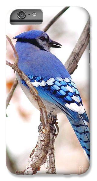 Blue Jay IPhone 7 Plus Case by Robert Frederick