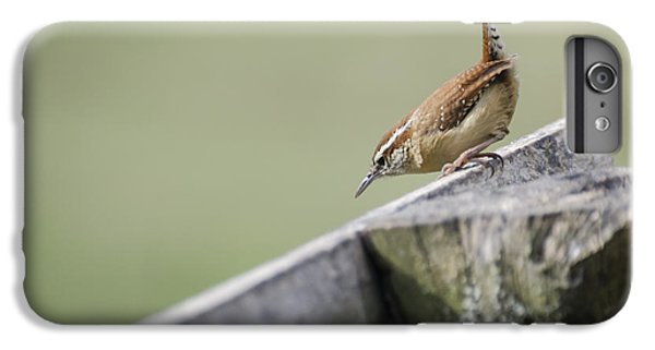 Carolina Wren Two IPhone 7 Plus Case by Heather Applegate