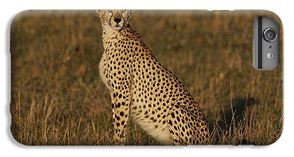 Cheetah On Savanna Masai Mara Kenya IPhone 7 Plus Case by Hiroya Minakuchi