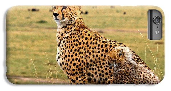 Cheetahs IPhone 7 Plus Case by Babak Tafreshi