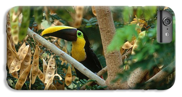 Chestnut-mandibled Toucan IPhone 7 Plus Case by Art Wolfe