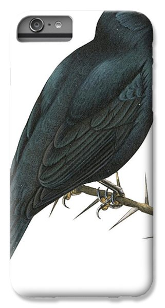 Cuckoo Shrike IPhone 7 Plus Case by Anonymous